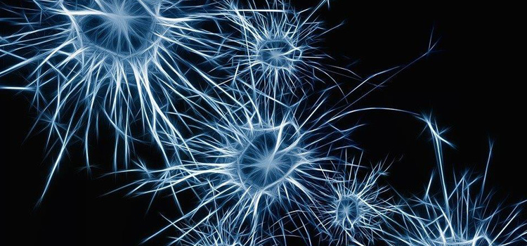 Graphic depiction of neurons